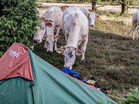 Hoe kan je gratis en legaal wildkamperen in Nederland