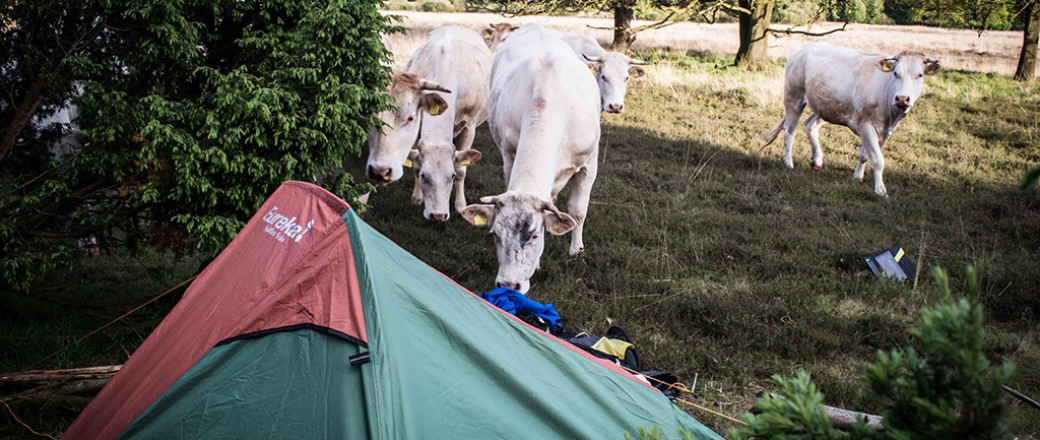 How to wild camp for free and legal in The Netherlands